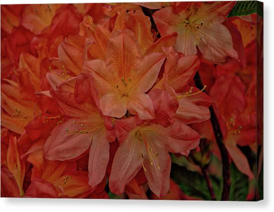 Flower 7 Canvas Print