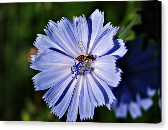 Flower And Bee 2 Canvas Print