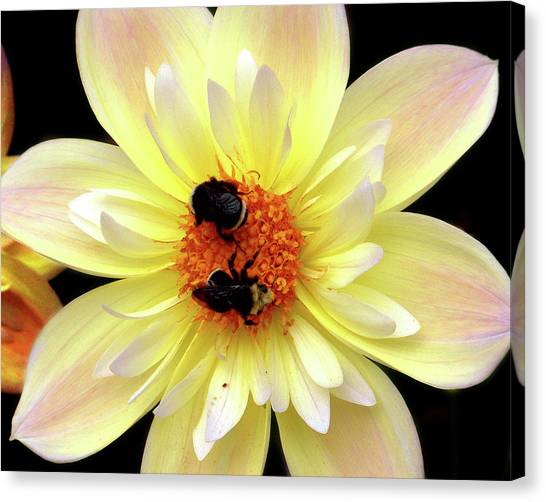 Flower And Bees Canvas Print