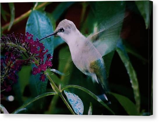 Flower And Hummingbird Canvas Print