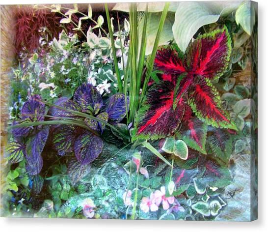 Flower Box Canvas Print by John Vandebrooke