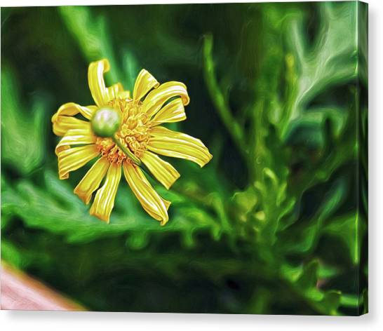Canvas Print featuring the digital art Flower And Bud by Doctor Mehta