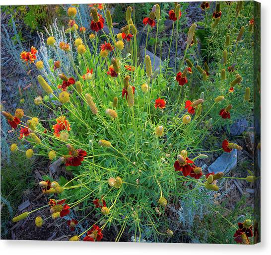 Canvas Print featuring the photograph Flower Burst by John Brink