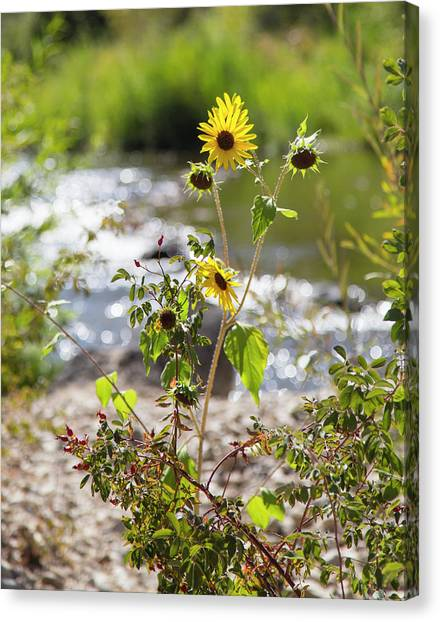Flower By Stream Canvas Print