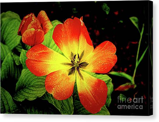 Kappa Delta Canvas Print - Flower Child by Jon Burch Photography
