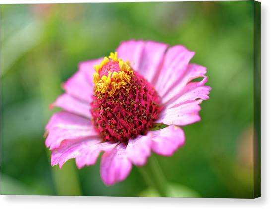 Flower Close-up Canvas Print