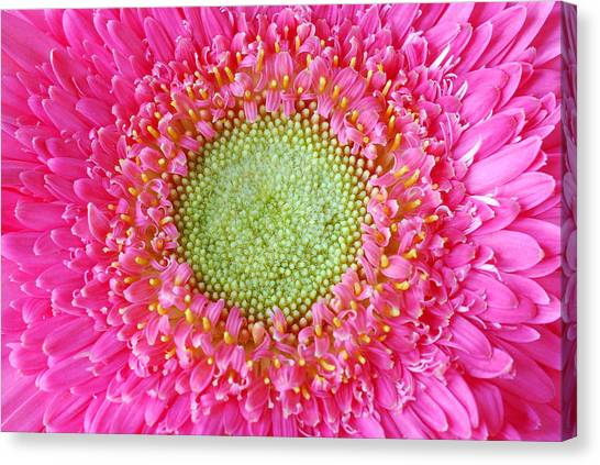 Flower Closeup Canvas Print by Deepak Pawar
