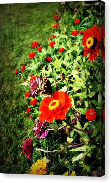 Flower Dance Canvas Print by Jill Tennison