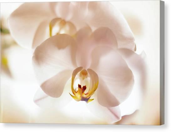 Flowers Delight- Canvas Print
