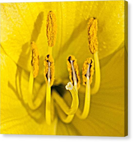 Flower Detail Canvas Print