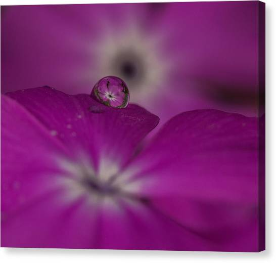 Flower Drop Canvas Print