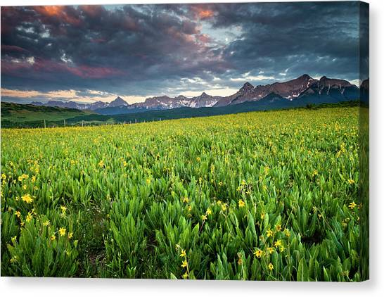 Flower Field And Sneffels Range Canvas Print