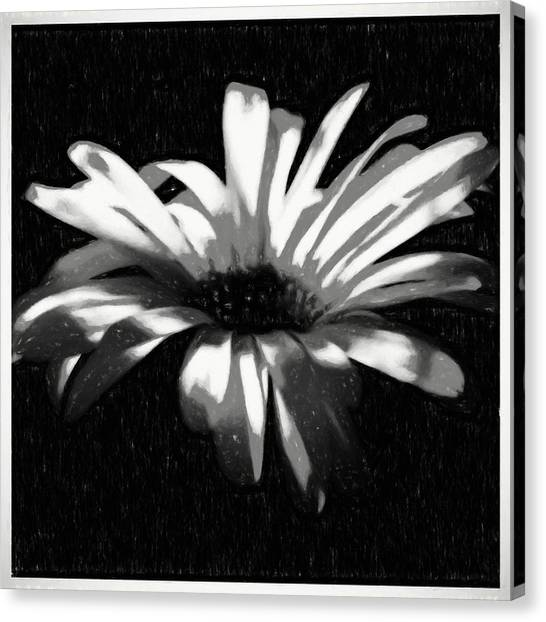 Border Wall Canvas Print - Flower In Black And White by Debra Lynch