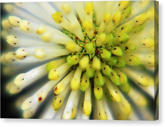 Flower Canvas Print by Marcus Adkins