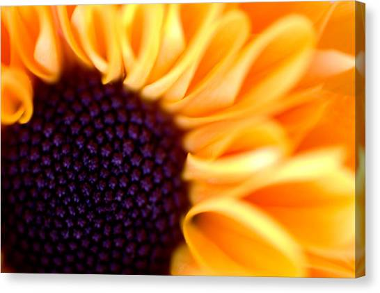 Flower No. 3 Canvas Print
