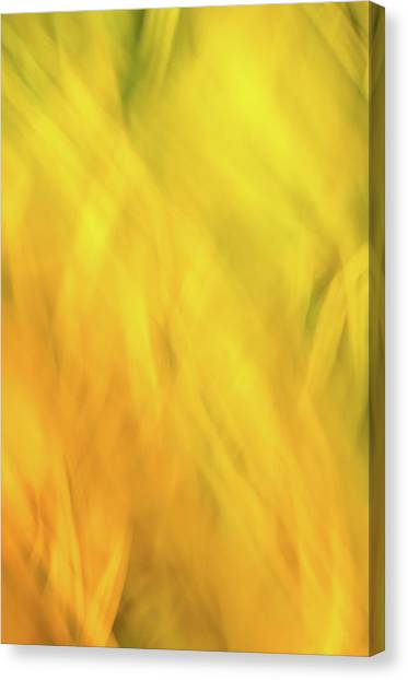 Flower Of Fire 2 Canvas Print