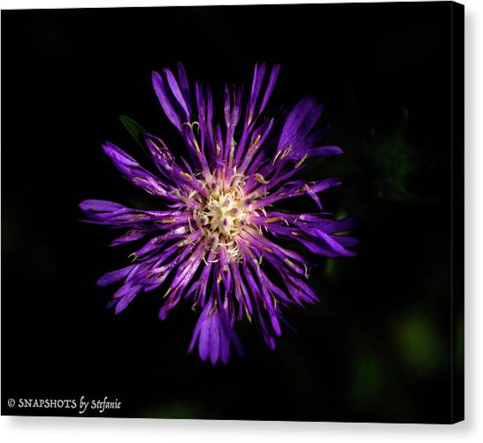 Flower Or Firework Canvas Print