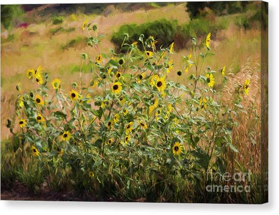 Colorado State University Canvas Print - Flower Or Weed? by Jon Burch Photography