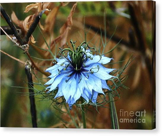 Flower Or Weed Canvas Print