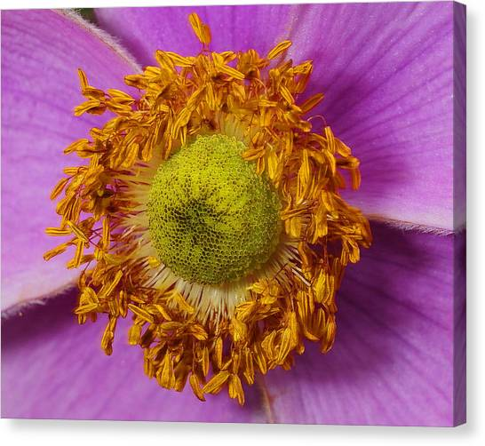 Flower Orbit Canvas Print