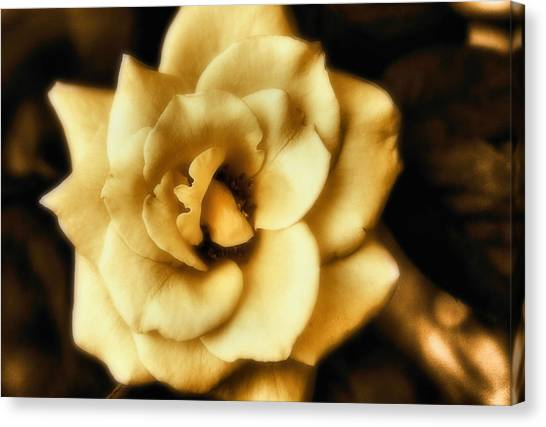 Flower Canvas Print by Gulf Island Photography and Images