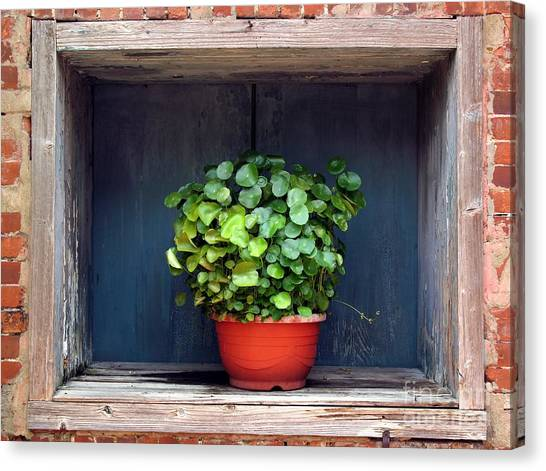 Flower Pot In A Window Canvas Print