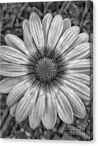Flower Power - Bw Canvas Print