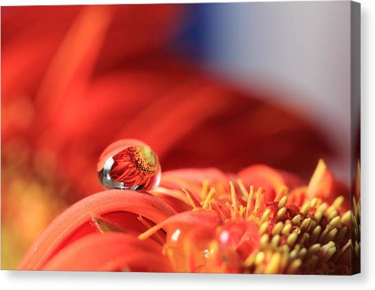 Flower Reflection In Water Drop Canvas Print