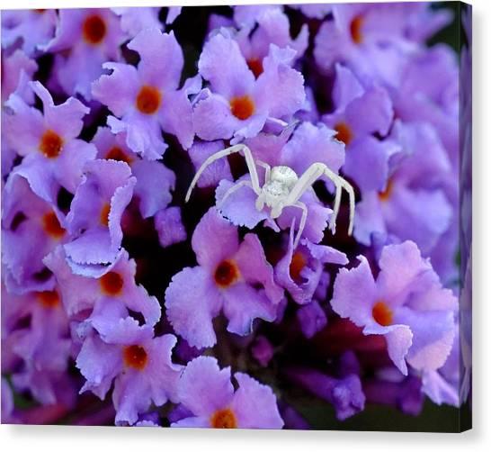 Flower Spider Canvas Print