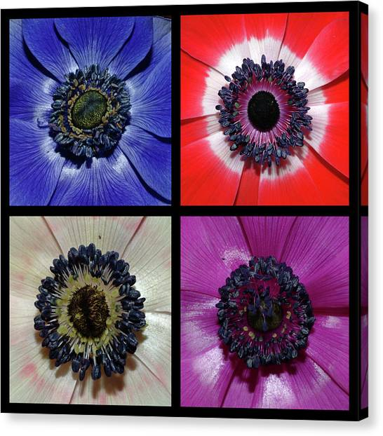 Flower Square Montage - Anemone Canvas Print