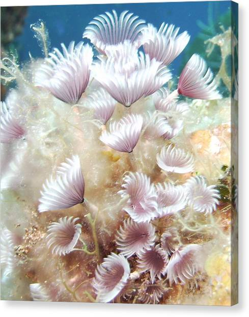 Flower Tube Worms Canvas Print by Cherry Woodbury