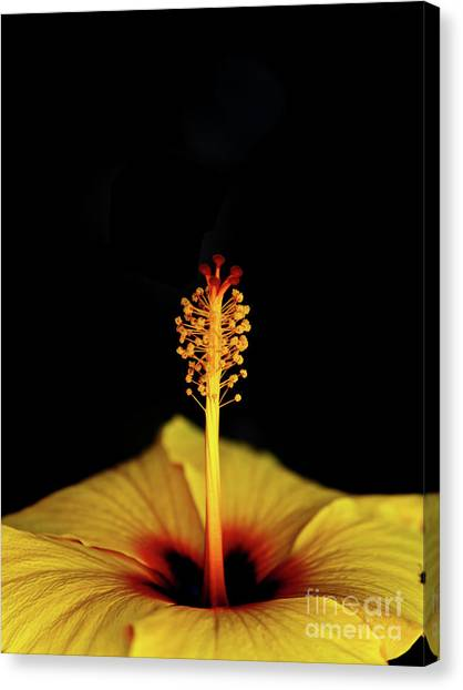 Flower_06 Canvas Print