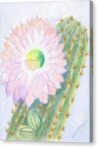 Flowering Cactus Canvas Print by Dawn Marie Black