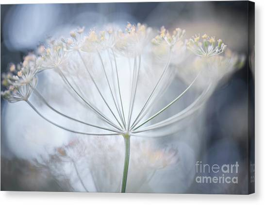 Canvas Print featuring the photograph Flowering Dill Details by Elena Elisseeva