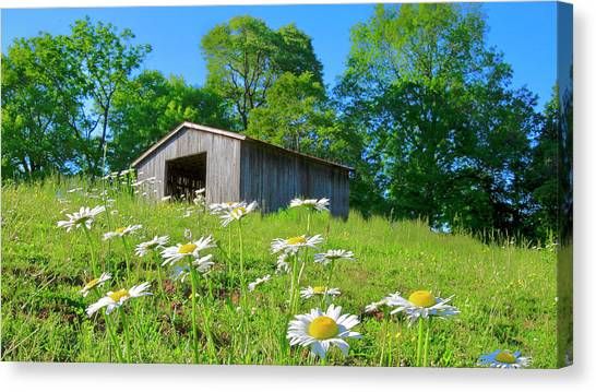 Flowering Hillside Meadow Canvas Print