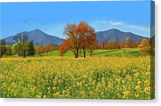 Flowering Meadow, Peaks Of Otter,  Virginia. Canvas Print