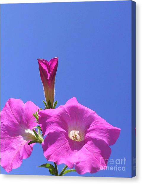 Flowering To Life I Canvas Print by Daniel Henning