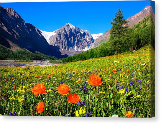 Flowering Valley. Mountain Karatash Canvas Print