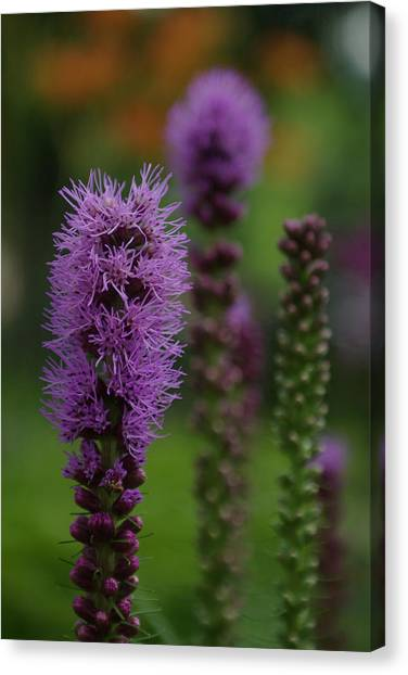 Flowers 4 Canvas Print by Eric Workman