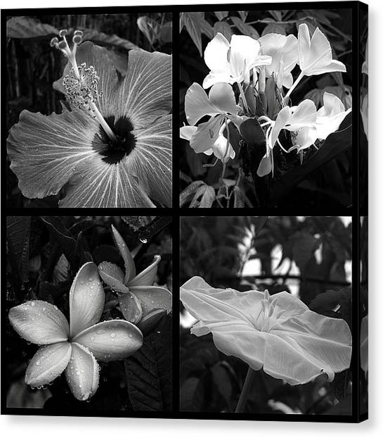 Flowers Canvas Print by Andre Panatto