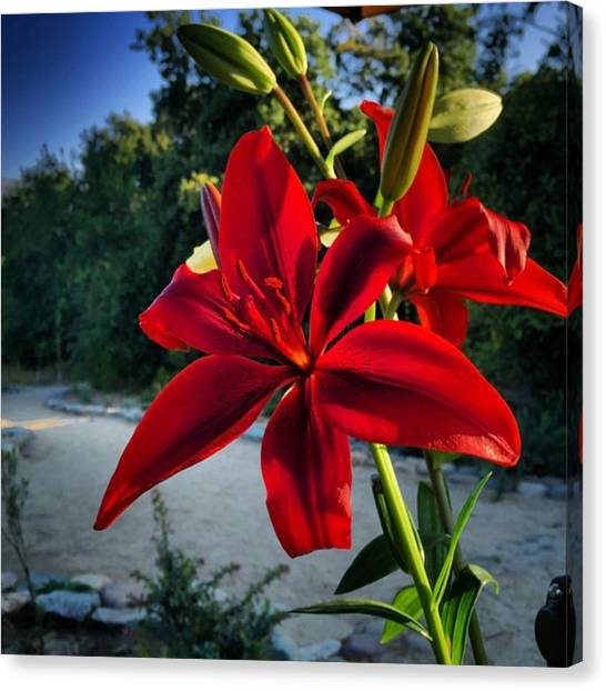 Rebirth Canvas Print - #flowers Are The #ecstatic Expression by Gary Sumner