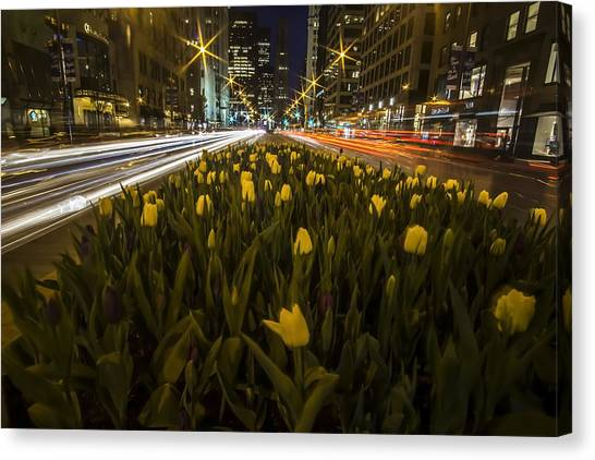 Flowers At Night On Chicago's Mag Mile Canvas Print