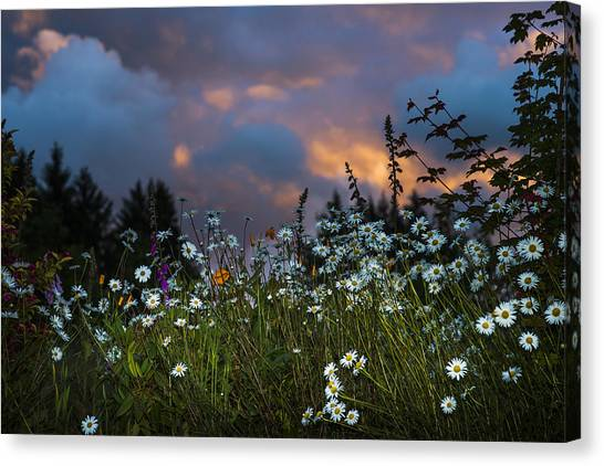 Flowers At Sunset Canvas Print
