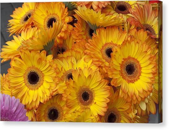 Flowers Bo71 Canvas Print by Charles  Ridgway