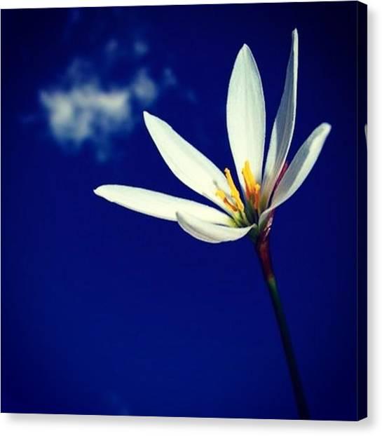 Botanical Canvas Print - #flowers #flower #tagsforlikes.com by Stuart Coutts
