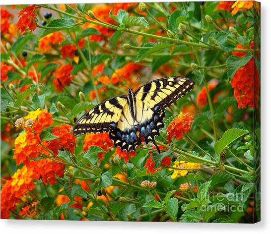 Flowers For Butterflies Canvas Print