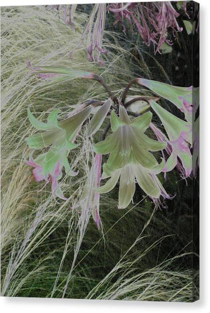 Flowers In Berkeley Canvas Print