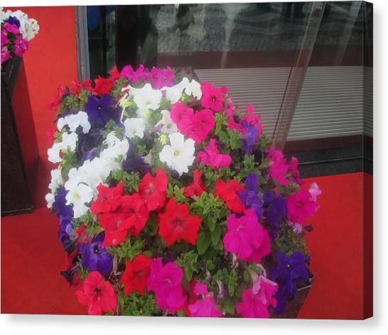 Smallmouth Bass Canvas Print - flowers in front of a hotel in Lisbon by Anamarija Marinovic