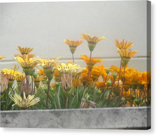 Smallmouth Bass Canvas Print - Flowers In My Neighborhood by Anamarija Marinovic