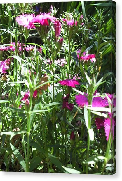 Flowers In The Garden Vii Canvas Print by Daniel Henning